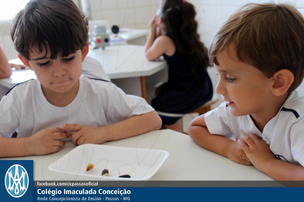 Você está vendo imagens do artigo: Maternal II: ciclo de vida de uma borboleta